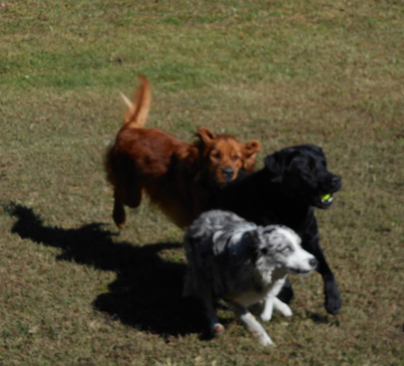 Dog Boarding Kennels In Wilmington Nc